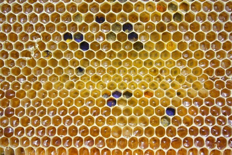 la cera de las abejas es el componente fundamental de la crema de beranga
